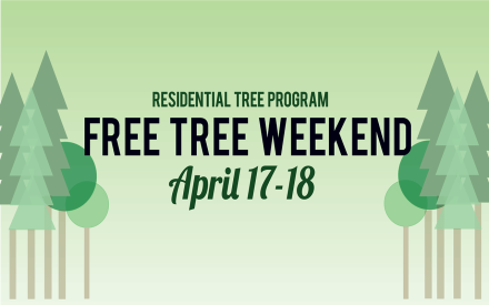 residential-tree-program